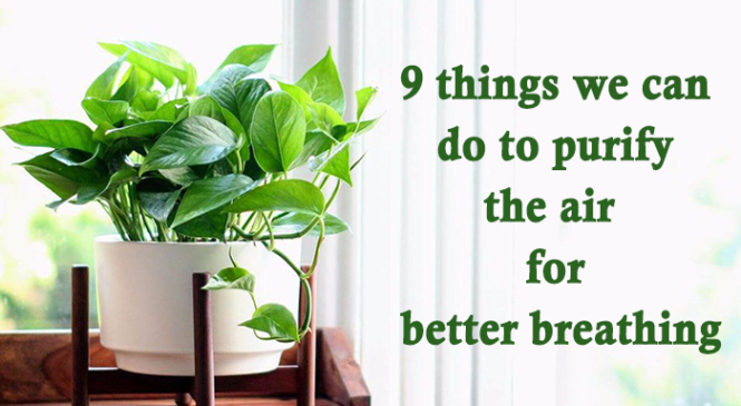 9 things we can do to purify the air for better breathing