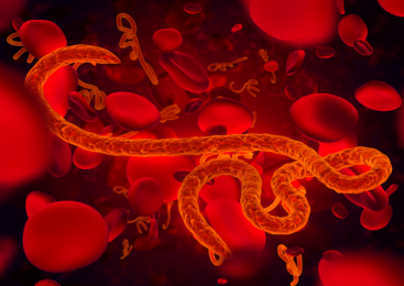 A Breakthrough Step to Discover the Cure for Ebola Virus: Here's What You Should Know